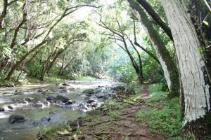 A stream in Hawaii