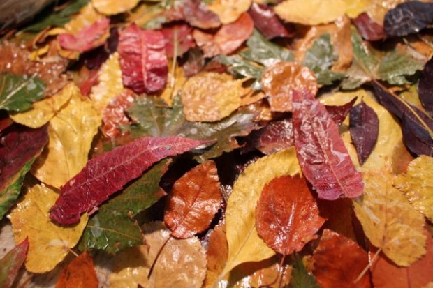 step-5-fall-wreath-from-real-leaves-HappyandBlessedHome.com