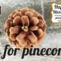 P-is-for-Pinecone-Preschool-Activity-HappyandBlessedHome.com