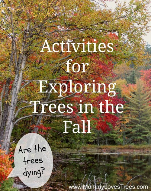 Exploring-Trees-in-Fall