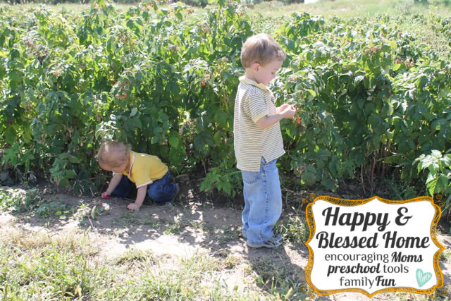 Picking-Berries-HappyandBlessedHome.com