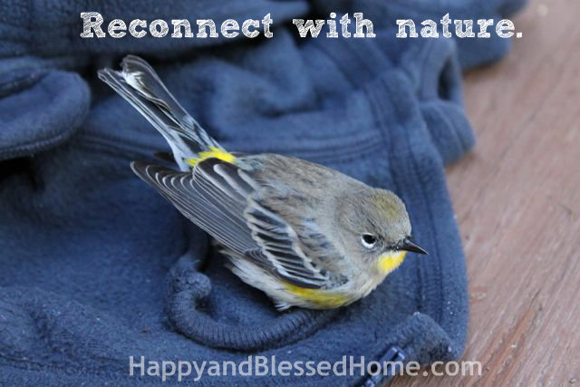 Teaching Toddlers Thankfulness - Reconnect with Nature Photo Copyright 2014 HappyandBlessedHome.com