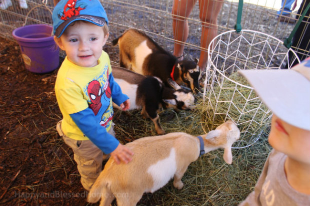Use Huggies to Clean hands at the petting Zoo photo copyright 2015 HappyandBlessedHome.com