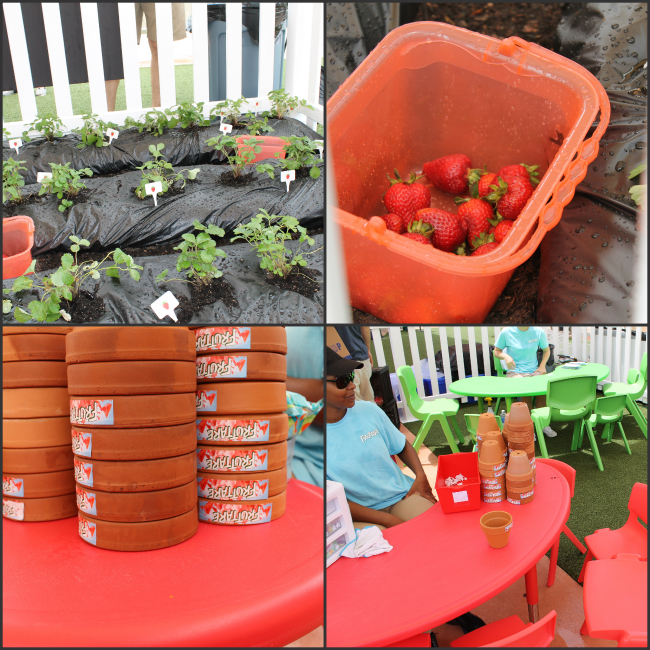 Fun fruit activty for kids - grow your own strawberries article by HappyandBlessedHome.com