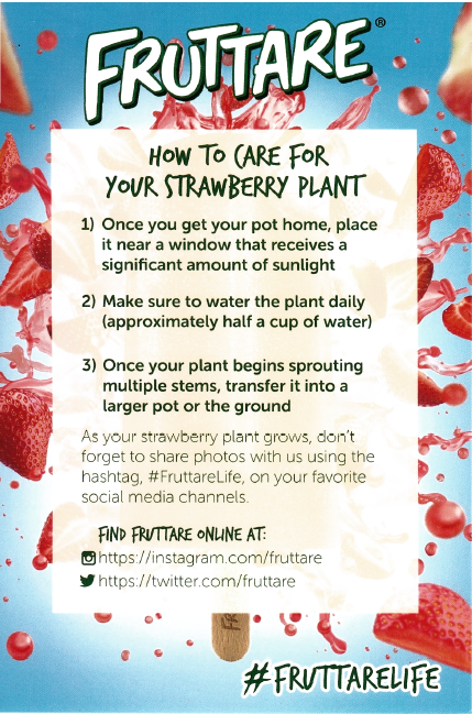 How to Care for a Strawberry Plant by Fruttare