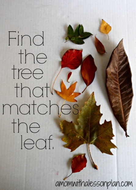 outdoor-activity-for-fall