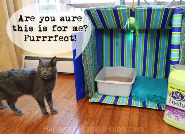 A perfect oasis for your cat - A Kitty Cabana