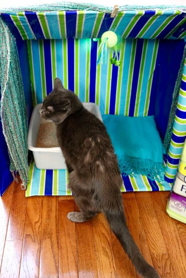 A faraway look! Kitty Cabana Craft